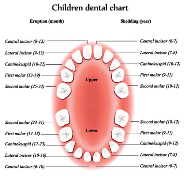 childrens-dental-chart